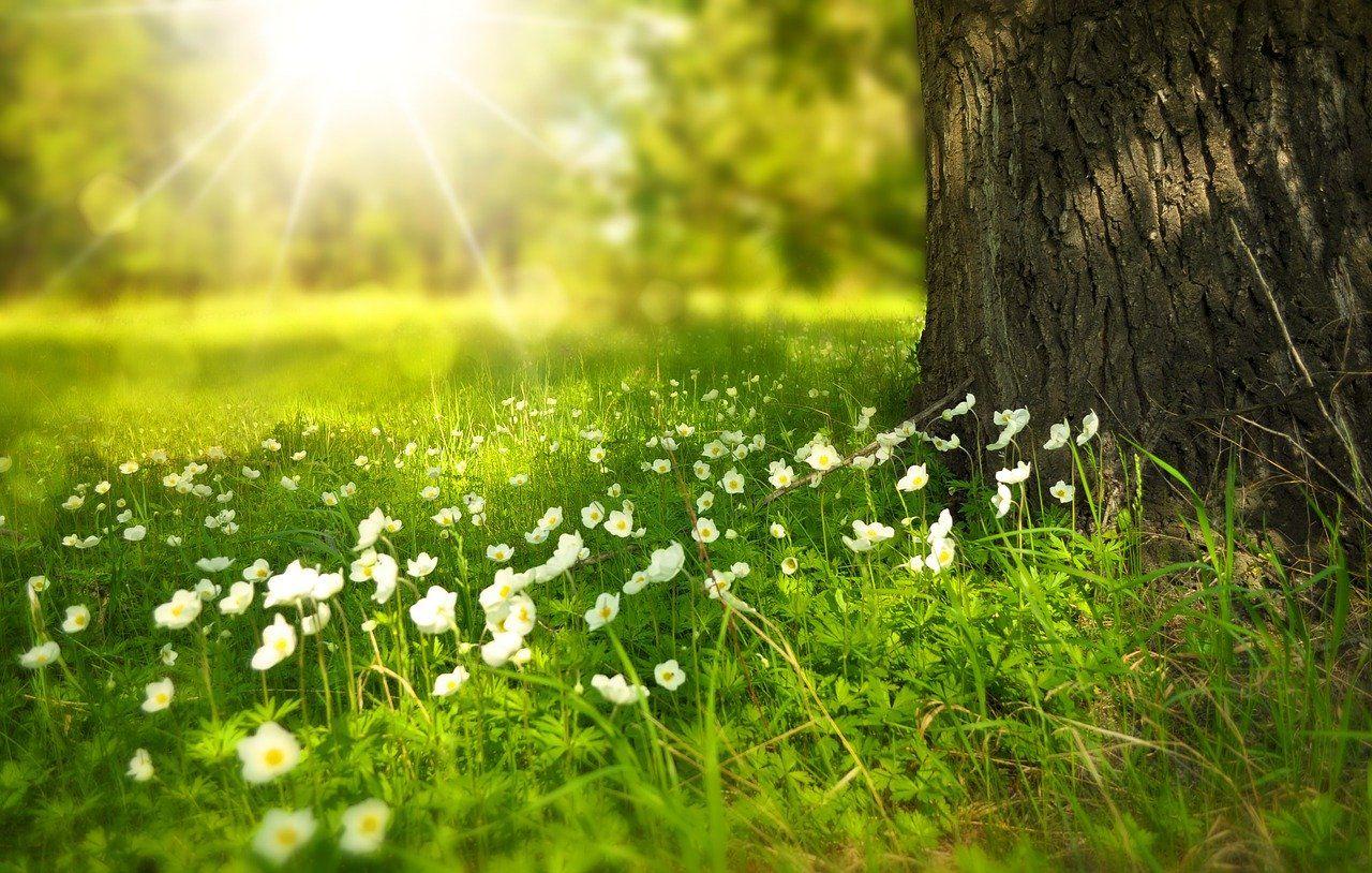 pacto verde medioambiental