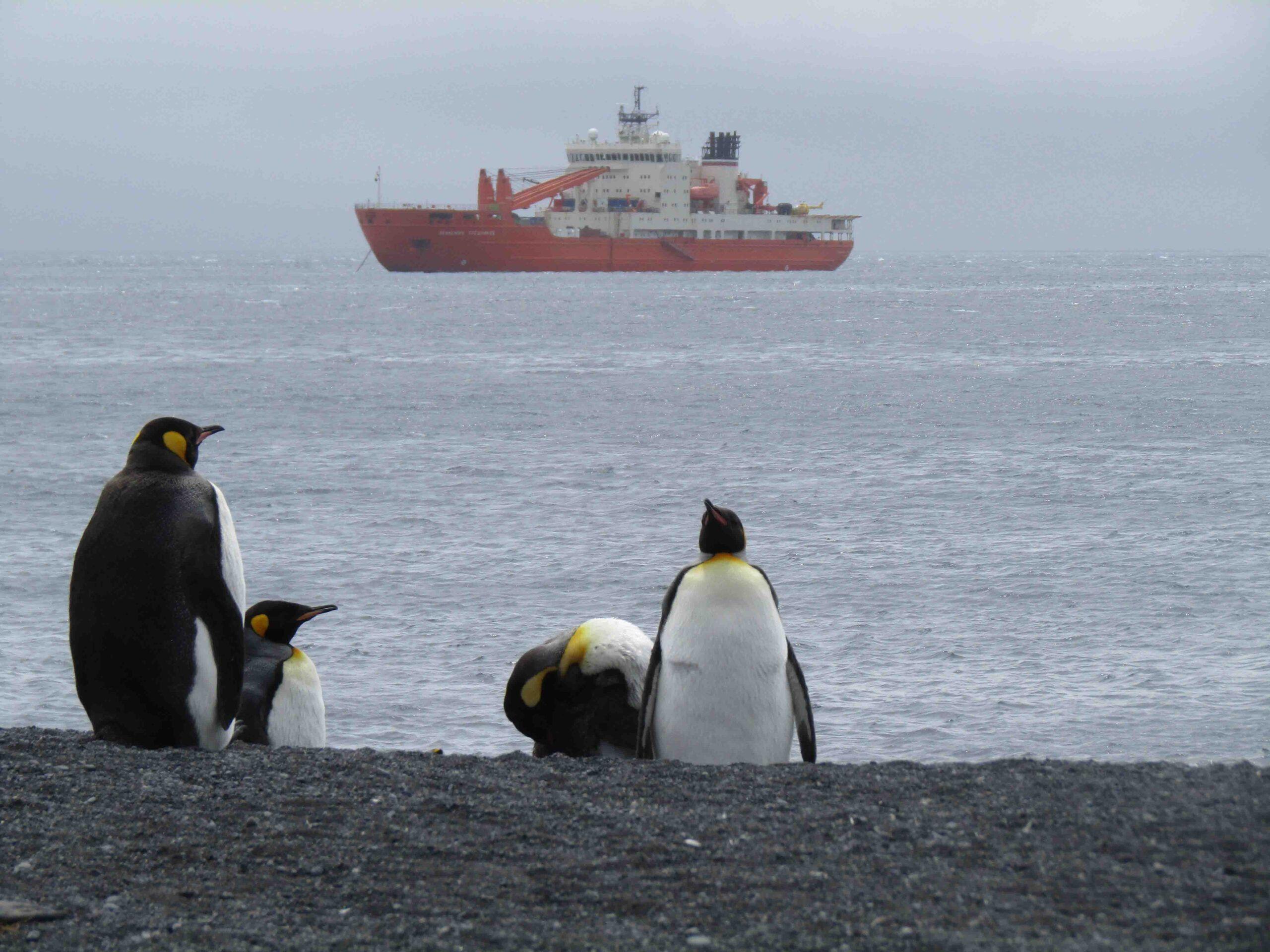 medioambiente pinguinos